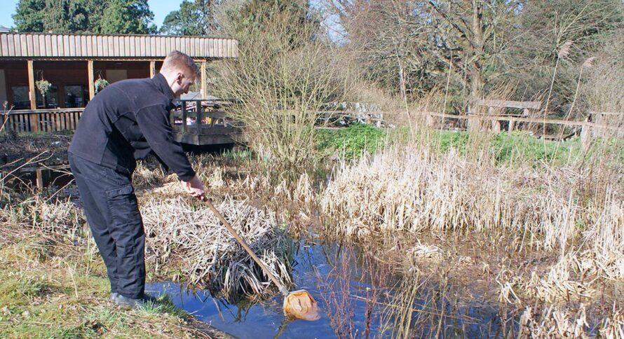 Pond survey Bromley Biodiversity