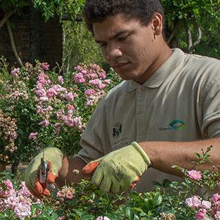At work in Dutch Garden