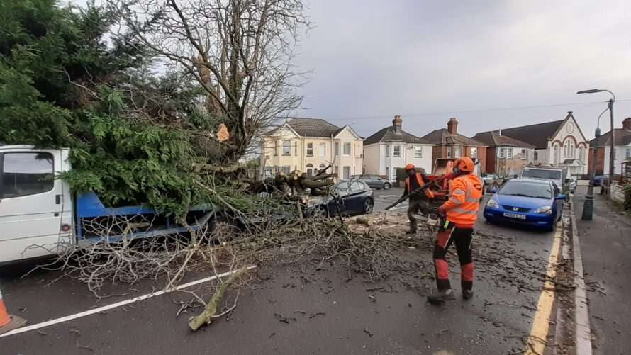 Storm Emergency Response | Tree Fallen