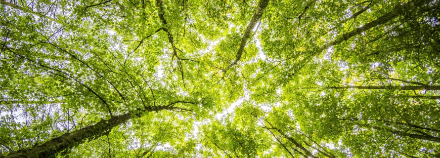 Sustainability | idverde UK