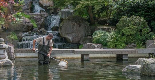 Kyoto pond header
