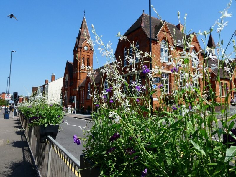 Bee-Friendly-plants-in-a-Barrier-Basket-for-Harbourne