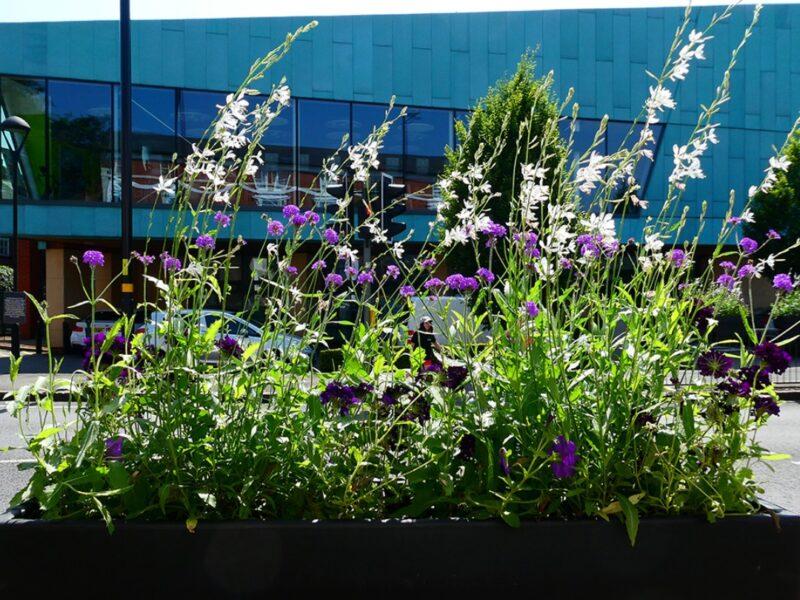 Pollinator Friendly Range