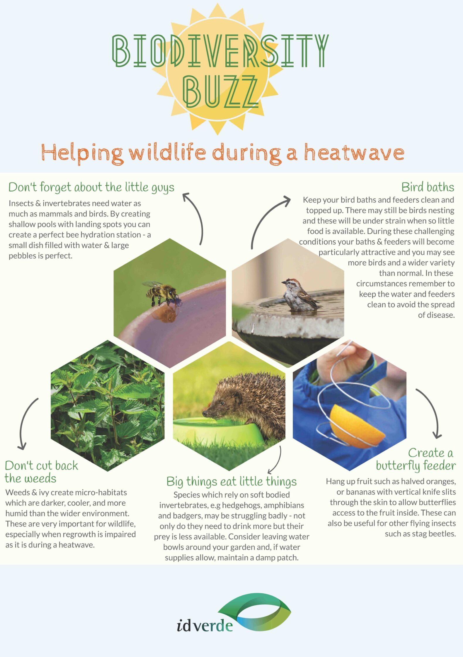 Helping wildlife in a heatwave_NC copy